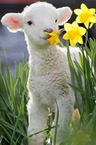 Easter Lamb