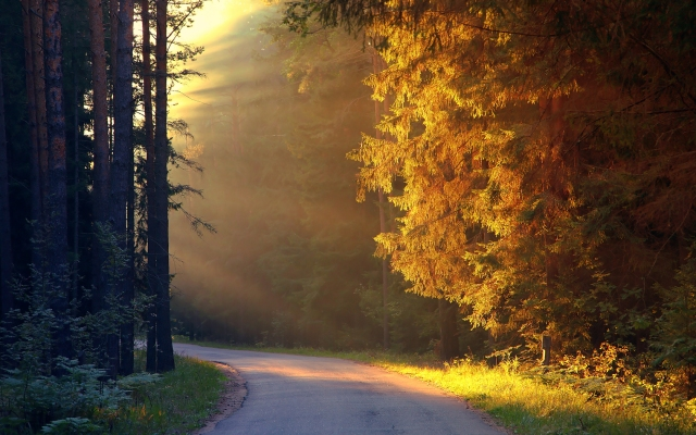 trees_sun_rays_on_road