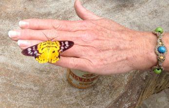 ButterflyonHand